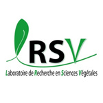 RSV-collaboration-toulouse-tech-transfer